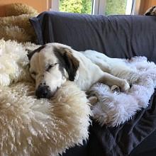 Das Hundesofa ist gemütlich