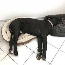 Nein wir haben nicht nur kleine Betten!