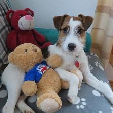 Spielen mit Teddys
